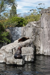 Auckland Zoo | lovely letters